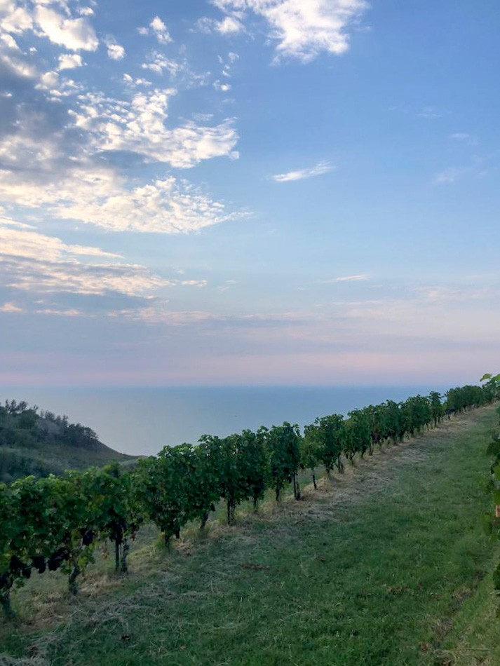 Summer trends: Aperitivo at Sunset in the vineyard
